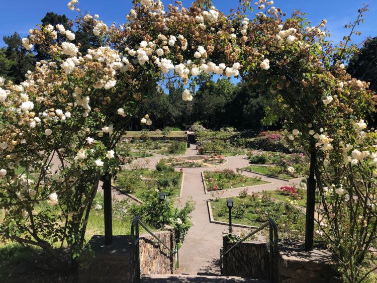 Jardín de rosas de Morcom