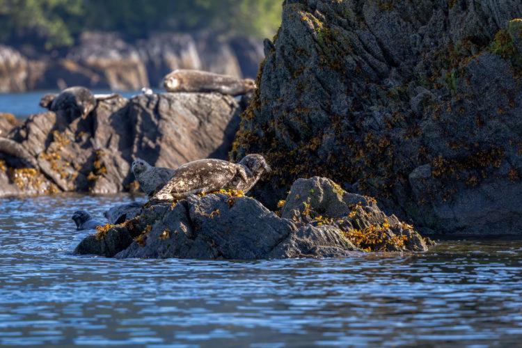 Crucero de observación de focas