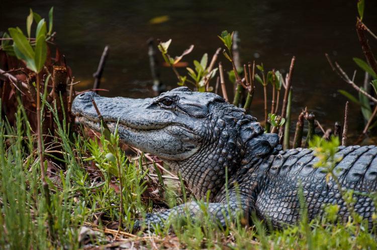 Entorno natural en The Conservancy of Southwest Florida