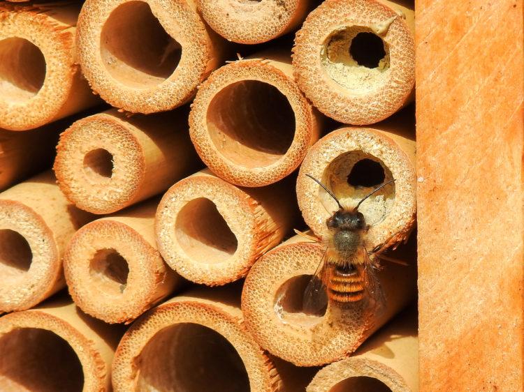 Santuario de abejas mayas