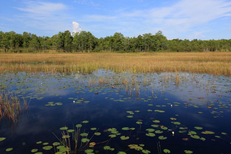 Reserva natural Grassy Waters