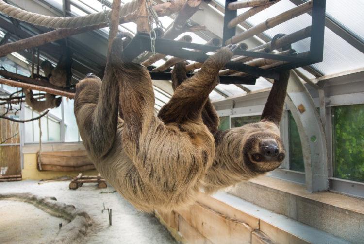 Jardín Botánico y Zoológico de Budapest