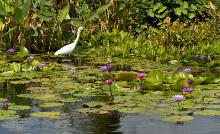 Conservación de aves en los jardines de aves de Nápoles