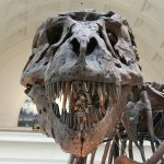 tyrannosaurus 447801 1280 Los 10 tipos de fósiles de dinosaurios más caros de todos los tiempos
